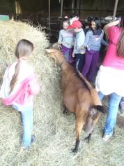 Tutti in fattoria